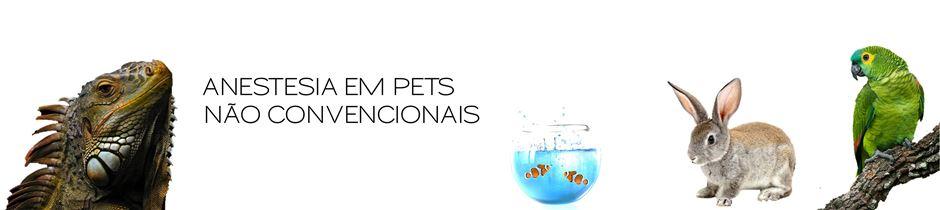 Anestesia em Pets Não Convencionais title=